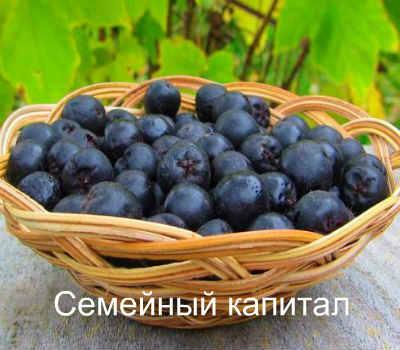chokeberry hipertónia receptek)